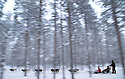 03/12/15<br /> <br /> After heavy overnight snowfall children ride on a sleigh pulled by huskies through a forest near Rovaniemi in Lapland.<br /> <br /> Sick children are flown from East Midlands Airport to visit Santa and spend the day in Lapland. When You Wish Upon A Star have been arranging these festive flights for 24 years.<br />  <br /> All Rights Reserved: F Stop Press Ltd. +44(0)1335 418365   +44 (0)7765 242650 www.fstoppress.com