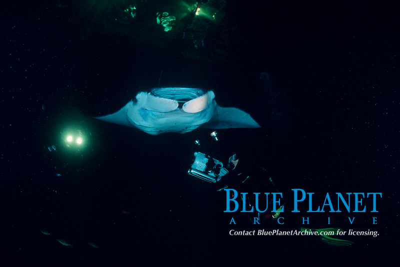 videographer and reef manta ray, Mobula alfredi, feeding on plankton attracted by the lights of a dive boat, the Kona Agressor II, Kona, Big Island, Hawaii, Pacific Ocean