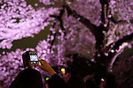 A visitor takes a photo of illuminated cherry blossoms with her smartphone at Chidorigafuchi moat in Tokyo, Japan, April 5, 2016.  (Photo by Yuriko Nakao/AFLO)