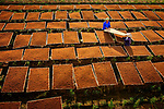 """Farmers lay out freshly chopped leaves which once dried will be used as pipe tobacco.  The farmers are pictured in the village of Thuy An, which is located in Thai Binh, Vietnam.<br /> <br /> After drying in the sun for around 5 to 6 days, in the same field that the plants are grown, the dried Lao leaves will be collected to be brought to market for sale by the farmers or sold on to traders. <br /> <br /> Bang Nguyen Trong, a teacher from Thai Binh, Vietnam, said, """"This is a traditional profession of the village, so most of the villagers here grow and produce Lao Medicines. Lao medicine is for use as tobacco. Drug brand Lao An Co is a famous brand in Vietnam.""""<br /> <br /> Please byline: Bang Nguyen Trong/Solent News<br /> <br /> © Bang Nguyen Trong/Solent News & Photo Agency<br /> UK +44 (0) 2380 458800"""
