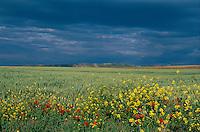Landschaft bei Estella, Navarra , Spanien