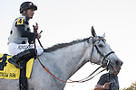 Jockey Jose Lezcano and Ullapool after winning the Florida Sunshine Millions Filly and Mare Sprint at Gulfstream Park, Hallandale Beach Florida. 01-18-2014