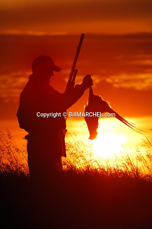 00890-036.17 Ring-necked Pheasant hunter is silhouetted against a low sun as he admires a bagged rooster. Hunt, magic hour, sunset.