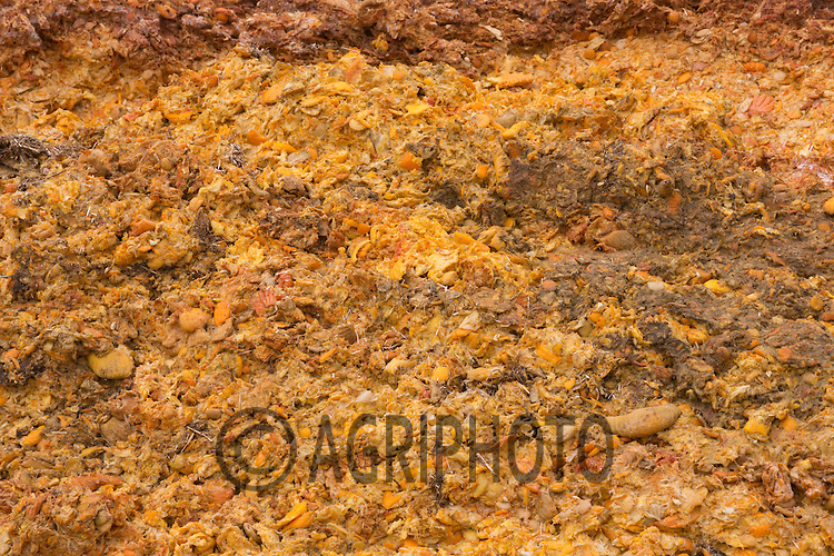 Orange peel used to feed dairy cows <br /> Picture Tim Scrivener 07850 303986<br /> ….Covering agriculture in the UK….