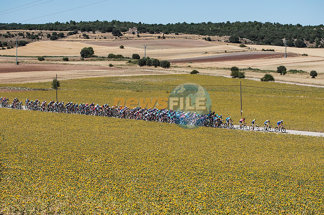 The peloton during Stage 4 of La Vuelta d'Espana 2021, running 163.9km from Burgo de Osma to Molina de Aragon, Spain. 17th August 2021.    <br /> Picture: Unipublic/Charly Lopez   Cyclefile<br /> <br /> All photos usage must carry mandatory copyright credit (© Cyclefile   Charly Lopez/Unipublic)