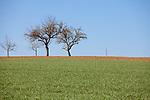 Europa, DEU, Deutschland, Baden Wuerttemberg, Schwarzwald, Schopfloch , Fruehling, Streuobstwiese, Natur, Umwelt, Landschaft, Jahreszeiten, Stimmungen, Landschaftsfotografie, Landschaften, Landschaftsphoto, Landschaftsphotographie, Wetter, Wetterelemente, Wetterlage, Wetterkunde, Witterung, Witterungsbedingungen, Wettererscheinungen, Meteorologie, Wettervorhersage, <br /> <br /> [Fuer die Nutzung gelten die jeweils gueltigen Allgemeinen Liefer-und Geschaeftsbedingungen. Nutzung nur gegen Verwendungsmeldung und Nachweis. Download der AGB unter http://www.image-box.com oder werden auf Anfrage zugesendet. Freigabe ist vorher erforderlich. Jede Nutzung des Fotos ist honorarpflichtig gemaess derzeit gueltiger MFM Liste - Kontakt, Uwe Schmid-Fotografie, Duisburg, Tel. (+49).2065.677997, ..archiv@image-box.com, www.image-box.com]
