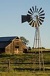 Old wooden barns on cattle  ranch, green grass, oaks, spring. 1890s open-backgear Aermotor windmill, Salt Spring Valley, Calif.