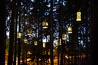 Lanterns Hanging in Trees, Arts-A-Glow Festival, Dottie Harper Park, Burien, WA, USA.