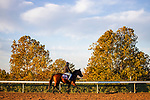October 31, 2020: Four Wheel Drive heads back to the barn after exercising at Keeneland Racetrack in Lexington, Kentucky on October 31, 2020. Alex Evers/Eclipse Sportswire/Breeders Cup