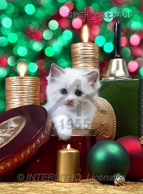 Xavier, CHRISTMAS ANIMALS, photos(SPCHcats480,#XA#)