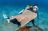 Japanese angelshark, Squatina japonica, and scuba diver, Hatsushima Island, Izu Peninsula, Japan, Pacific Ocean