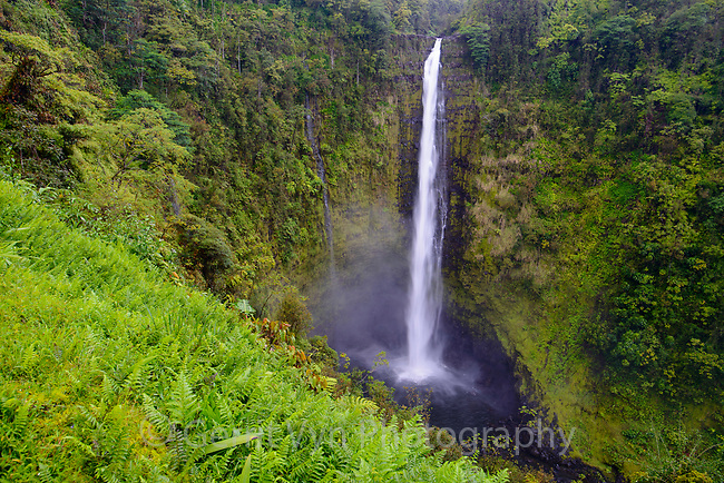 422 foot Akaka Falls. Though a beautiful site the scene is proimarily made up of non-native palnt speceis. Hawaii.