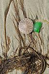 Sand dollar and beach glass on sand