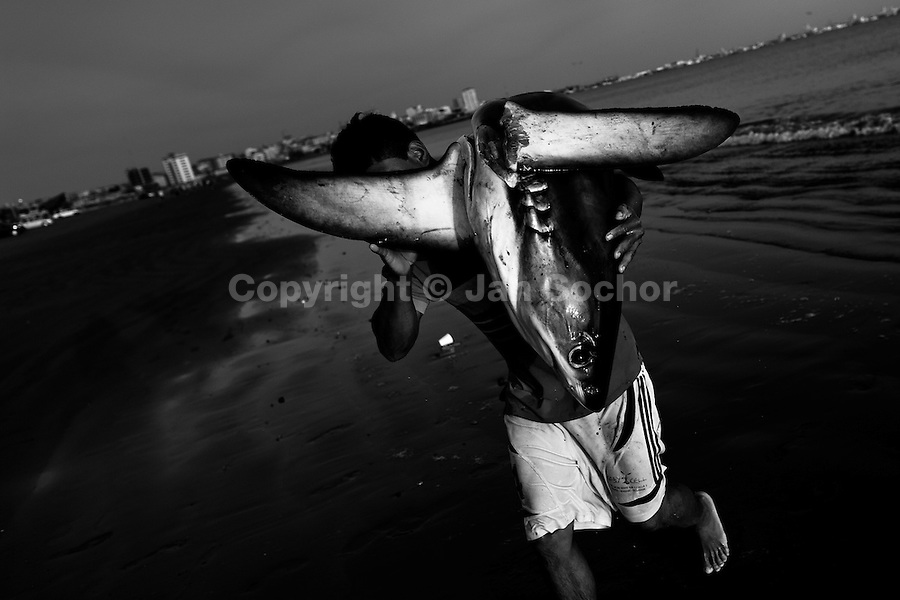 A fisherman carries a dead shark body at dawn on the beach of Manta, Ecuador, 9 September 2012. Every morning, hundreds of shark bodies and thousands of shark fins are sold on the Pacific coast of Ecuador. Although the targeted shark fishing remains illegal, the presidential decree allows free trade of shark fins from accidental by-catch. However, most of the shark species fished in Ecuadorean waters are considered as ?vulnerable to extinction? by the World Conservation Union (IUCN). Although fishing sharks barely sustain the livelihoods of many poor fishermen on Ecuadorean at the end of the shark fins business chain in Hong Kong they are sold as the most expensive seafood item in the world. The shark fins are primarily exported to China where the shark's fin soup is believed to boost sexual potency and increase vitality. Rapid economic growth across Asia in recent years has dramatically increased demand for the shark fins and has put many shark species populations on the road to extinction.