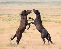 Desert Clash/ The Battle