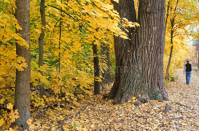 A man walking through the fallen leaves in Greenough Park in Missoula, Montana