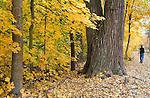 A man walking through the fallen leaves in Greenough Park in Missoula, Montana