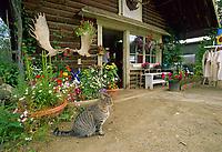 Log cabin gift shop, Native village, Eagle, Alaska