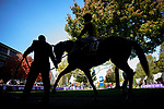 November 6, 2020: A racehorse is walked through the paddock at Keeneland Racetrack in Lexington, Kentucky, on Friday, November 6, 2020. Scott Serio/Eclipse Sportswire/Breeders Cup/CSM