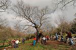 T-019 Oak Tree in Tivon