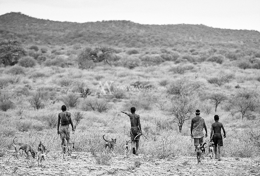 There were many small dogs that joined the men on their hunt. They were useful in tracking prey in thick brambles and bushes. However, we noticed that the Hadza did not treat their animals too kindly, kicking and beating them if they got in the way.
