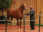 Hip #246 Distorted Humor - Rockcide filly at the Keeneland September Yearling Sale.  September 11, 2012.