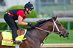 April 29, 2014: Commanding Curve, trained by Dallas Stewart, exercises in preparation for the Kentucky Derby at Churchill Downs in Louisville, KY. Scott Serio/ESW/CSM