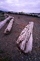 Driftwood near Cape Alava, Olympic National Park, Washington, US