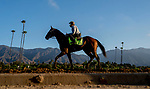 October 27, 2019 : Scenes from preparations for the Breeders' Cup World Championships at Santa Anita Park in Arcadia, California on October 27, 2019. Scott Serio/Eclipse Sportswire/Breeders' Cup/CSM
