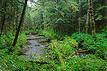 Mixed coniferous forest (Red Cedar, Sitka Spruce, Western Hemlock). Great Bear Rainforest, British Columbia, Canada.