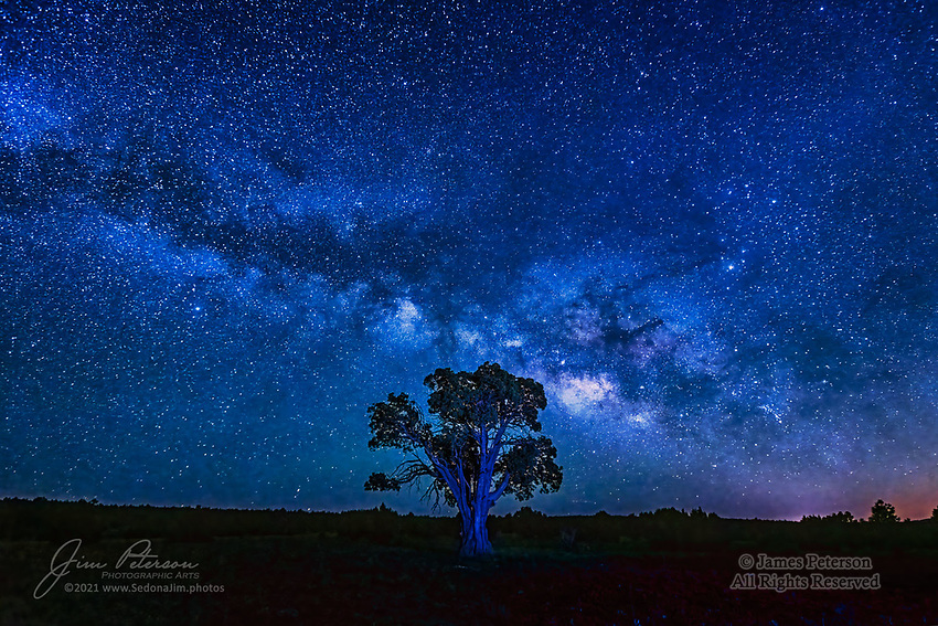 Tree of The Galaxy.  It's possible, of course, that this ancient, robust alligator juniper tree on the Mogollon Rim of central Arizona isn't the only tree in our galaxy; in fact, reliable sources will tell you that there are billions of them just on our minuscule planet alone, and potentially unfathomable numbers of them elsewhere in the Milky Way.  But on the night I captured this image, on a photo trek with a couple of good friends, this was the only tree anywhere as far as we were concerned.<br /> <br /> Image ©2021 James D. Peterson