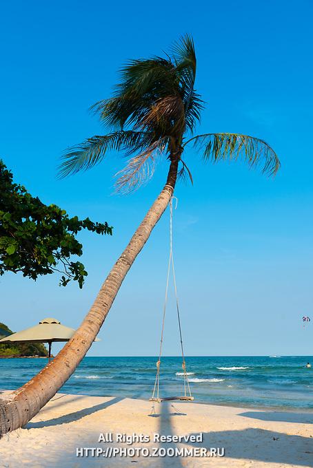 Palm Tree With Swing, Bai Sao Beach, Phu Quoc, Vietnam