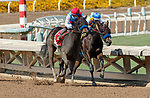 ARCADIA, CA  SEP 26: #1 Princess Noor, ridden by Victor Espinoza, takes on #4 Illumination, ridden by Luis Saez, into the stretch of the Chandelier Stakes (Grade ll) on September 26, 2020 at Santa Anita Park in Arcadia, CA. . (Photo by Casey Phillips/Eclipse Sportswire/CSM.