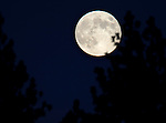 The blue moon rises over the Pine Nut Mountains, near Gardnerville, Nev. on Friday, Aug. 31, 2012. .Photo by Cathleen Allison