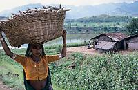 INDIA, Narmada river, tribal village Domkhedi, which will be submerged by SSP dam reservoir, Bhil woman carry basket with Sorghum/ INDIEN, Narmada Fluss, Adivasi Dorf Domkhedi, das vom Stausee des SSP Staudamm überschwemmt wird