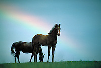 Thoroughbred mare with foal and rainbow. Bright future beauty pastoral  Photo montage. horse, horses, animals, special effects, peace, innocence.