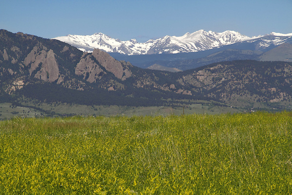 Golden clover and the Flatirons rock formation (right) with the Indian Peaks Wilderness Area behind, from east of Boulder, Colorado, USA Private photo tours to Indian Peaks. Private photo tours of Boulder. .  John leads private photo tours in Boulder and throughout Colorado. Year-round Colorado photo tours.