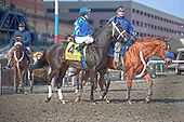 It's Tricky returns to the races in the Top Flight at Aqueduct on March 3