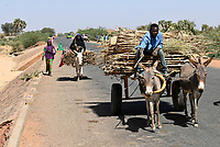 NIGER, village Namaro, rural transport, people go to the market by donkey cart / Dorf Namaro, Transport zum Markt