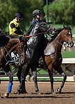 """ARCADIA, CA. SEPTEMBER 29: #2 Gunmetal Gray, ridden by Flavien Prat, in the post parade of the American Pharoah Stakes (Grade l) """"Win and You're In Breeders' Cup Juvenile Division""""on September 29, 2018 at Santa Anita Park in Arcadia, CA. (Photo by Casey Phillips/Eclipse Sportswire/CSM)"""