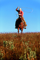 A cowboy on horseback practices roping in an open meadow.