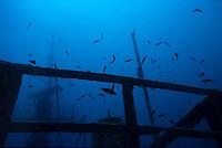 School of fish swimming around the Toho Shipwreck, Noumea Lagoon, New Caledonia.