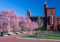 Smithsonian Institution, The Castle, Washington, D.C.  Early Morning with Saucer Magnolia Trees in Bloom.  Enid A. Haupt Garden.