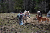 Henry Frazier, retired man with generations of family in the Adirondacks.  He works with horses on his farm.