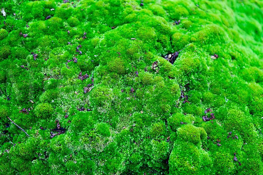 Moss detail.