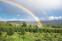 Thunderstorm clouds with rainbow and barn over Monroe, Oregon.