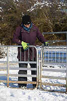 25-1-2021 Shepherds moving in lamb ewes in the snow covered in Lincolnshire <br /> ©Tim Scrivener Photographer 07850 303986<br />      ....Covering Agriculture In The UK....