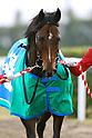 Horse Racing: Mile Championship