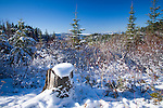 Idaho, North,Coeur d'Alene Mountains. A winter view in the Coeur d'Alene Mountains of trees and snow near fourth of July Pass.