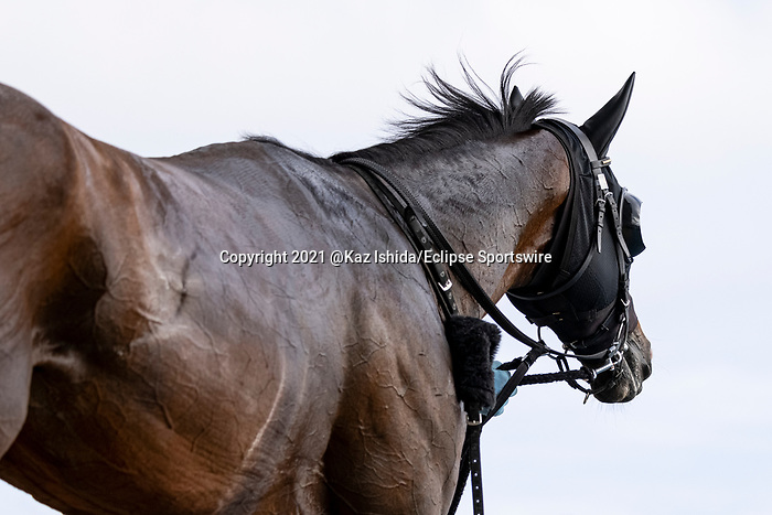 HAKODATE,JAPAN-AUG 8: Suave Aramis after winning the Elm Stakes at Hakodate Racecourse on August 8,2021 in Hakodate,Hokkaido,Japan. Kaz Ishida/Eclipse Sportswire/CSM